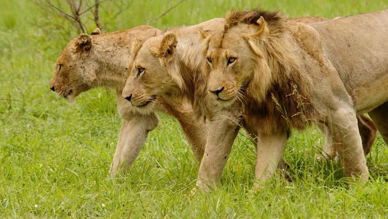 Najgroźniejsze zwierzęta świata