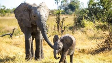 Mądry jak słoń