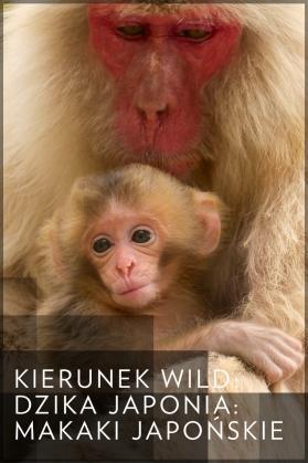 Kierunek Wild: Dzika Japonia: makaki japońskie